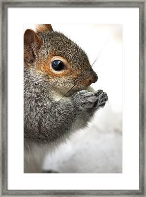 Munching Framed Print by Karol Livote