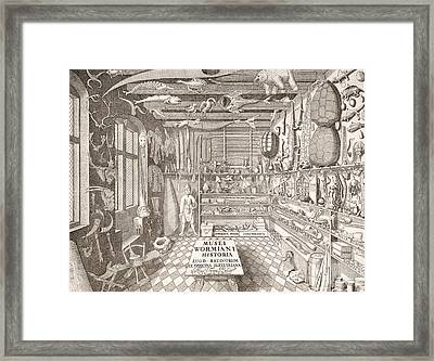 Museum Of Ole Worm, Leiden, 1655 Engraving Framed Print by G. Wingendorp