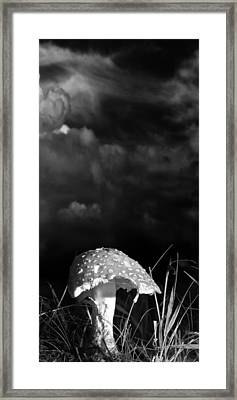 Mushroom Framed Print by Bob Orsillo