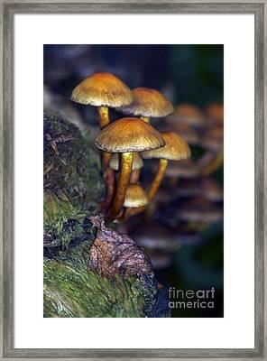 Mushrooms Aglow Framed Print by Sharon Talson
