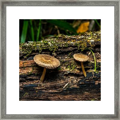 Mushrooms In The Forest Framed Print by Paul Freidlund