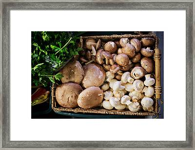 Mushrooms Framed Print by Tanya Harrison