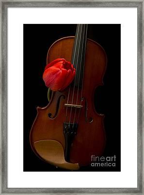 Music Lover Framed Print by Edward Fielding