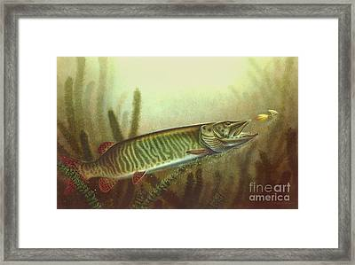 Muskie And Spinner Bait Framed Print by Jon Q Wright