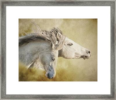 Mustang Run Framed Print by Ron  McGinnis