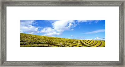 Mustard Fields, Napa Valley Framed Print by Panoramic Images