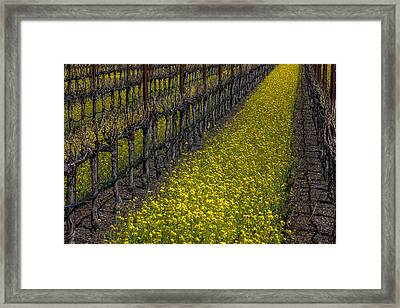 Mustrad Grass In The Vineyards Framed Print by Garry Gay