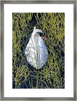 Mute Swan Framed Print by Heidi Gallo