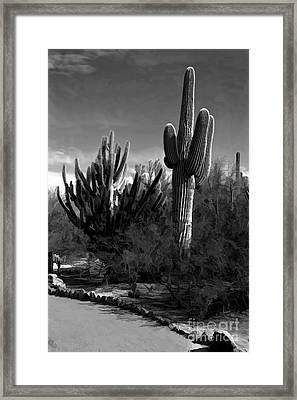 Mutt And Jeff Framed Print by Jon Burch Photography