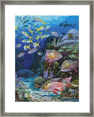 Mutton Reef Re002 Framed Print by Carey Chen