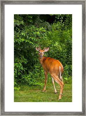 Mutual Respect Framed Print by Karol Livote