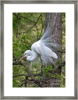My Beautiful Plumage Framed Print by Kathy Baccari