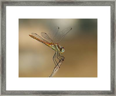 My Best Dragonfly Framed Print by Janina  Suuronen