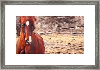My Fine Friend The Flashy Chestnut Stallion Framed Print by Patricia Keller