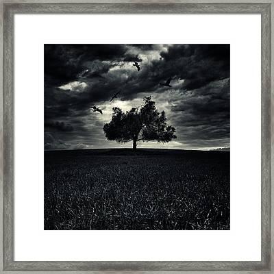 My Friends Framed Print by Stelios Kleanthous