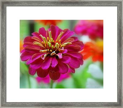 My Garden Framed Print by Marija Djedovic