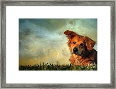 My Girl Framed Print by Darren Fisher