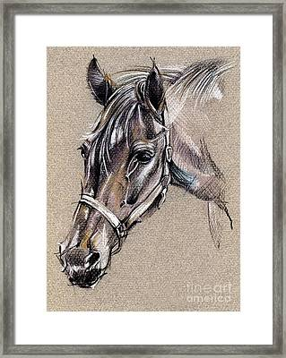 My Horse Portrait Drawing Framed Print by Daliana Pacuraru