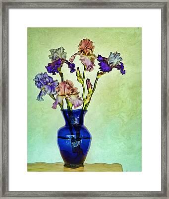 My Iris Vincent's Genius Framed Print by Nikolyn McDonald