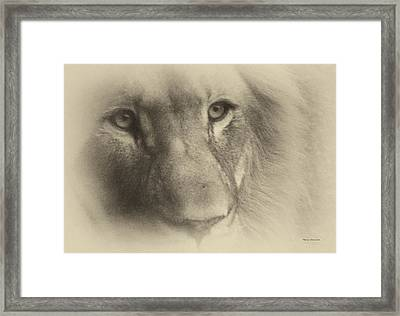My Lion Eyes In Antique Framed Print by Thomas Woolworth