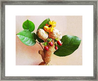 My Little Ginger Tree 2 Framed Print by Sarah Loft