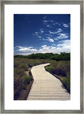 My Mind Wanders Framed Print by Laurie Search