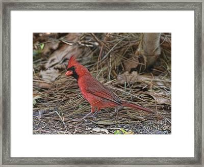 My Name Is Red Framed Print by Deborah Benoit