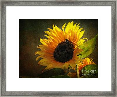 ...my Only Sunshine Framed Print by Lianne Schneider