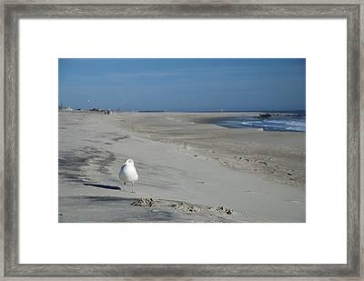 My Seagull Friend Framed Print by Jennifer Lyon
