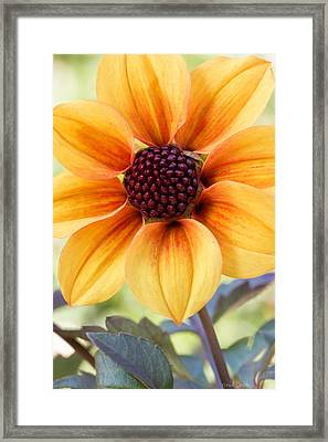 My Sunshine Framed Print by Heidi Smith