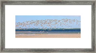 My Tern Framed Print by Bill Wakeley