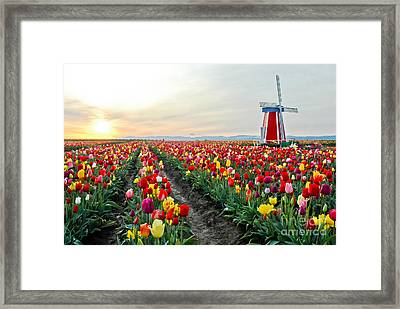 My Touch Of Holland 2 Framed Print by Nick  Boren