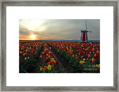 My Touch Of Holland Framed Print by Nick  Boren