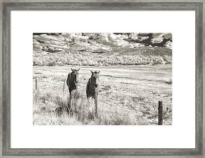 My Two Friends Framed Print by Jon Glaser