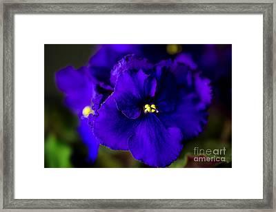 My Violet I Framed Print by Tamyra Ayles