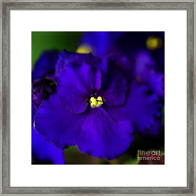 My Violet IIi Framed Print by Tamyra Ayles