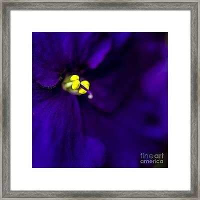 My Violet Iv Framed Print by Tamyra Ayles