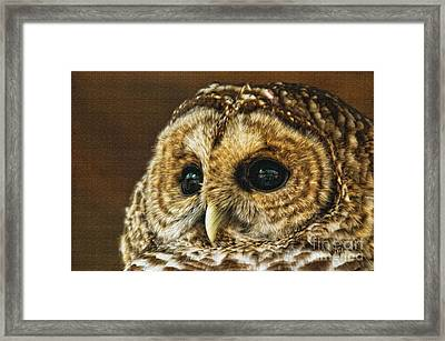My What Big Eyes You Have Framed Print by Lois Bryan
