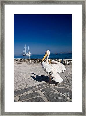 Mykonos Pelican Framed Print by David Smith
