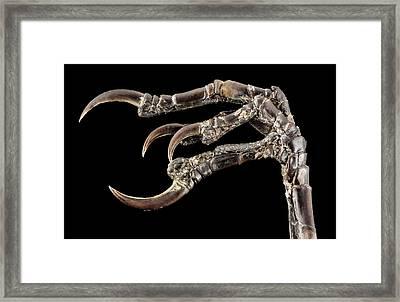 Myrtle Warbler Foot Framed Print by Us Geological Survey