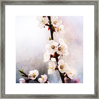 Mysteries Of Spring 1 - Square Framed Print by Alexander Senin