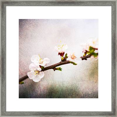 Mysteries Of Spring 4 - Square Framed Print by Alexander Senin