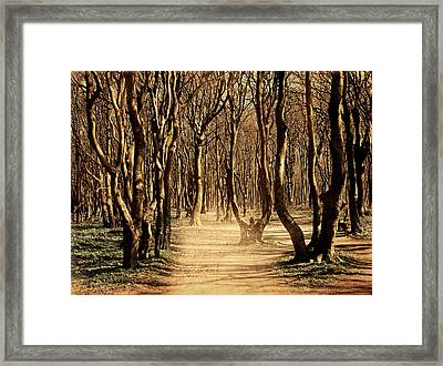 Mysterious Forest Framed Print by Heike Hultsch
