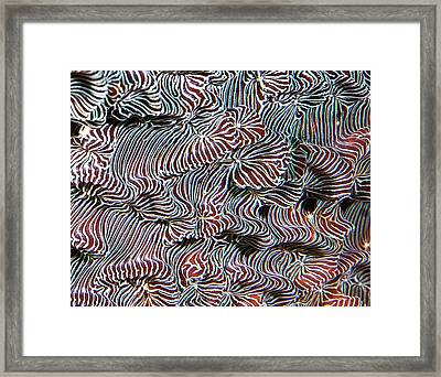 Mysterious Life Form Framed Print by Jean Noren