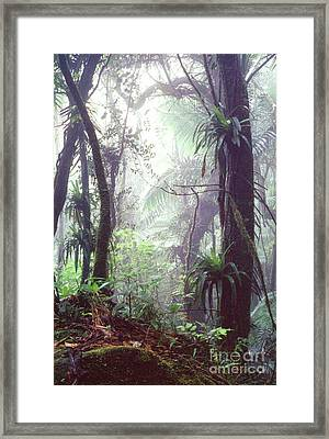 Mysterious Misty Rainforest Framed Print by Thomas R Fletcher