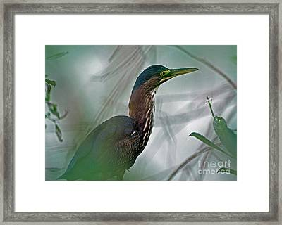 Mystery In The Marsh Framed Print by Inspired Nature Photography Fine Art Photography