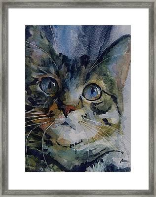Mystery Tabby Framed Print by Paul Lovering