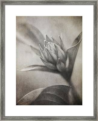Mystic Anticipation Framed Print by Dale Kincaid