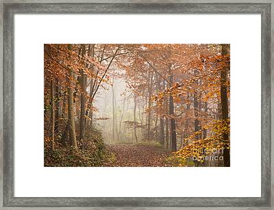 Mystic Woods Framed Print by Anne Gilbert
