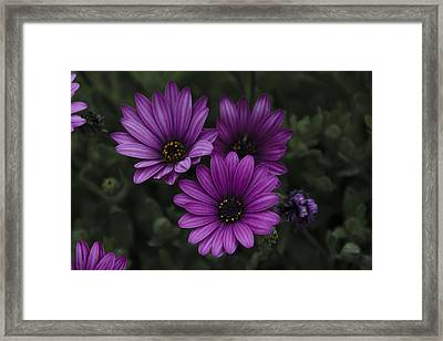 Mystical Purple Framed Print by Penny Lisowski